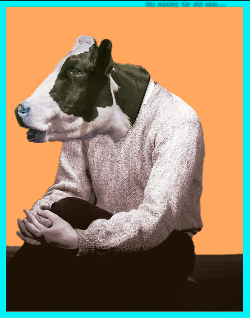 Old Cow